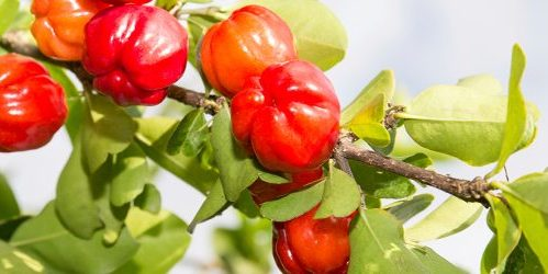 ultra-nutrients-acerola
